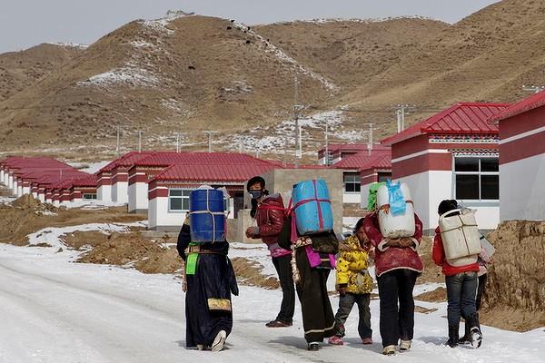 tibet-survive