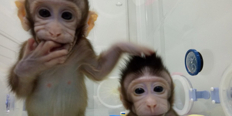 China Successfully Clones Two Monkeys. Are Humans Next?